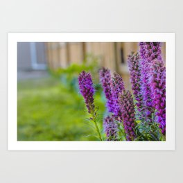 Purple Blazing Star 2 Art Print