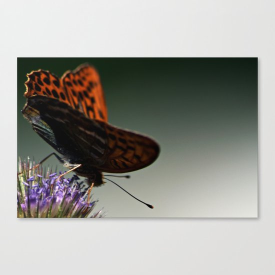 I spread my wings Canvas Print