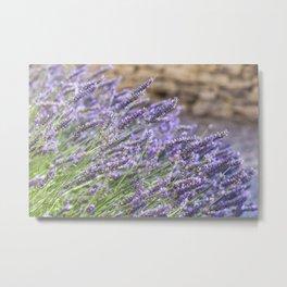 French Lavender Beauties Metal Print