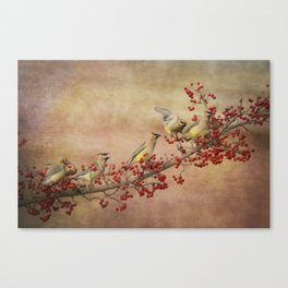 Cedar Waxwings Gathering Canvas Print