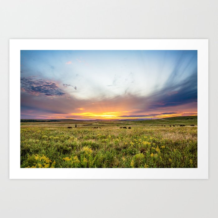 Tallgrass Prairie Sunset And Bison On The Plains Art Print By Seanramsey