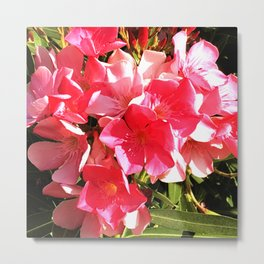 Vibrant Red Flowers in Warm Summer Sunlight Metal Print