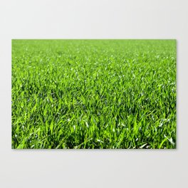 Green grass field in a sunny day Canvas Print