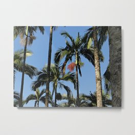 Palm in florest Metal Print