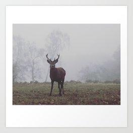 Foggy Richmond Park Art Print
