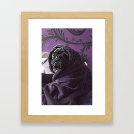 Portrait of a Pug Framed Art Print
