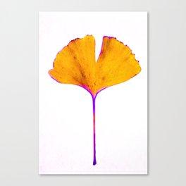 ginkgo biloba leaf Canvas Print