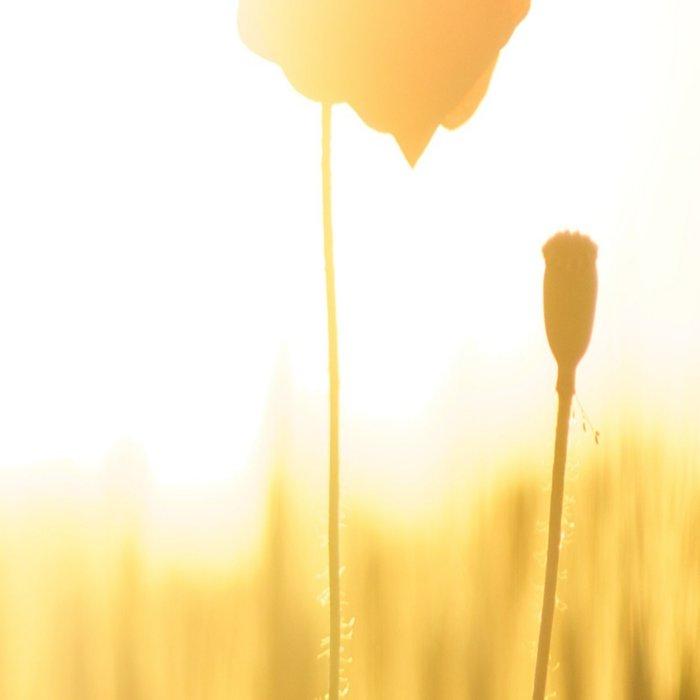Poppies in the Sun Leggings