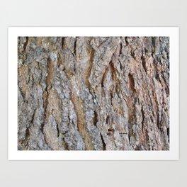 TEXTURES -- Big Cone Pine Bark Art Print