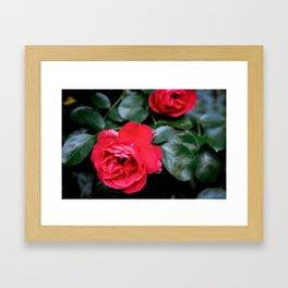 Moody Roses Framed Art Print