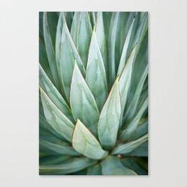 Abstract Agave Canvas Print