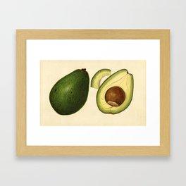 Vintage Illustration of an Avocado 2 Framed Art Print