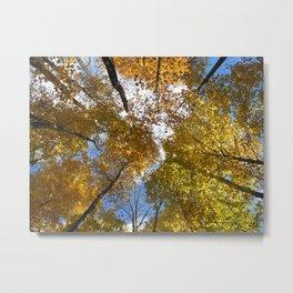 Acer Saccharum Metal Print