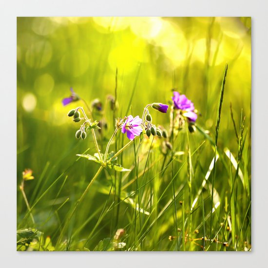 Beautiful meadow flowers - geranium on a sunny day - brilliant bright colors Canvas Print