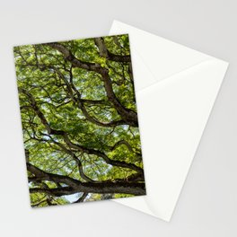 river of branches Stationery Cards