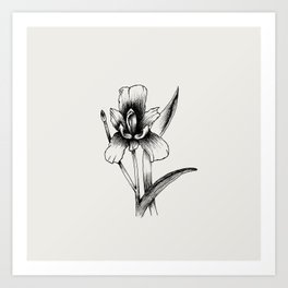 Flower #2 Art Print