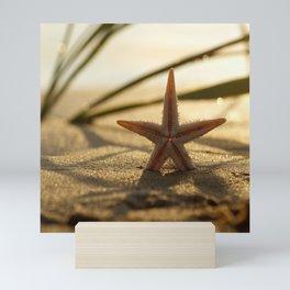 Starfish Still life on the beach in sunset Mini Art Print