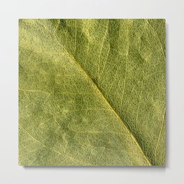 field of green Metal Print