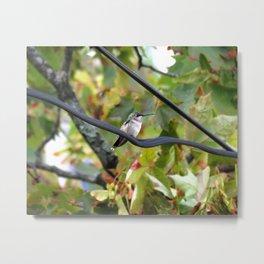 Power line hummingbird 25 Metal Print
