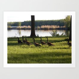 feathered family Art Print