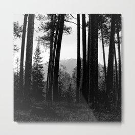 Looking Through the Tree Wall Metal Print