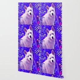 Isabella White Siberian Husky Wallpaper