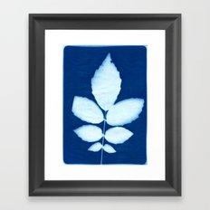 Indigo 4 Framed Art Print