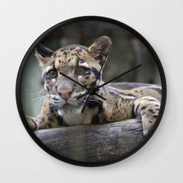 Wild Baby Leopard Wall Clock