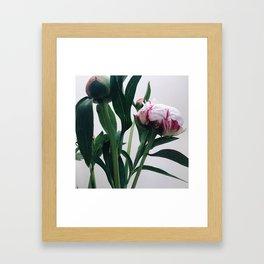 peonie3 Framed Art Print