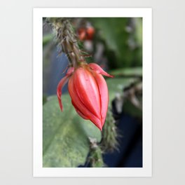 Beautiful Cactus Bud Art Print