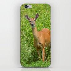 Deer on Edge of Field iPhone & iPod Skin