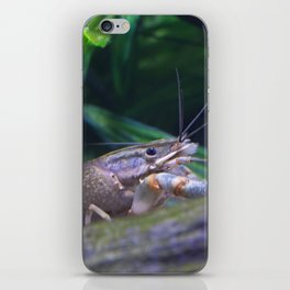 The crayfish iPhone Skin