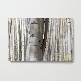 The Grove / Colorado Metal Print