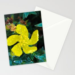 Small yellow flower with water drops Stationery Cards