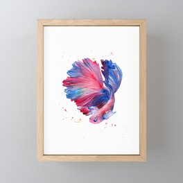 Betta Splendens Fish Framed Mini Art Print