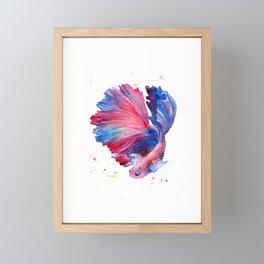Betta Splendens Fish Framed Mini Art Print
