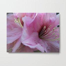 Garden Spring Flowers Pink Rhododendrons Metal Print