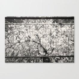 Colourless Tree Canvas Print