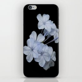 Pale Blue Plumbago Isolated on Black Background iPhone Skin