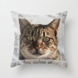 Beautiful Eyed Tabby Cat  Throw Pillow