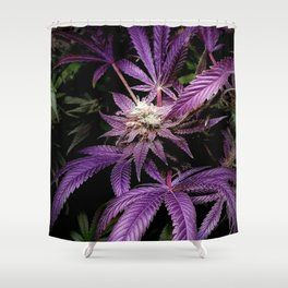 Purrple Shower Curtain