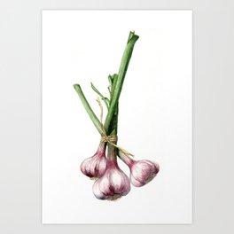 A Bunch of Garlic Art Print