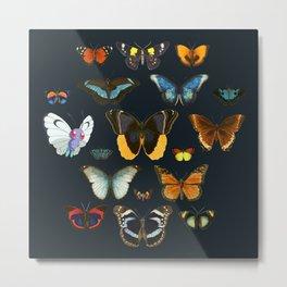 Entomology Vintage Butterfly Metal Print