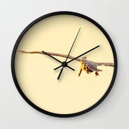 Bird - Brown Pelican - Study 3 Wall Clock