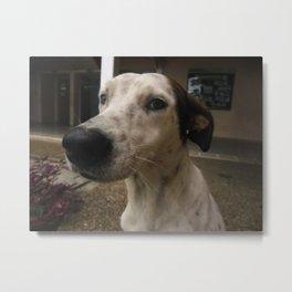 A nose a dog Metal Print