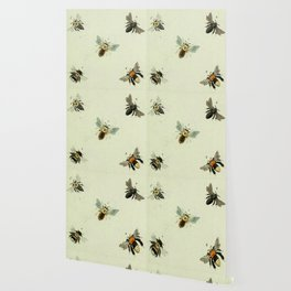 Bee Species Wallpaper