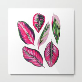 Calathea pink leaves Metal Print