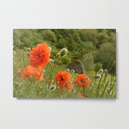 Big red poppy flowers in the meadow Metal Print