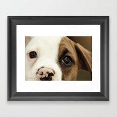 Boxer Nose Framed Art Print
