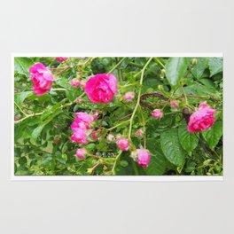 Flowers of the garden Rug